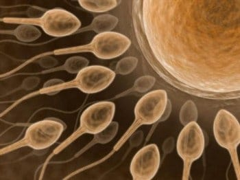 penis enlargement and sperm count
